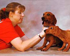 продажа собак